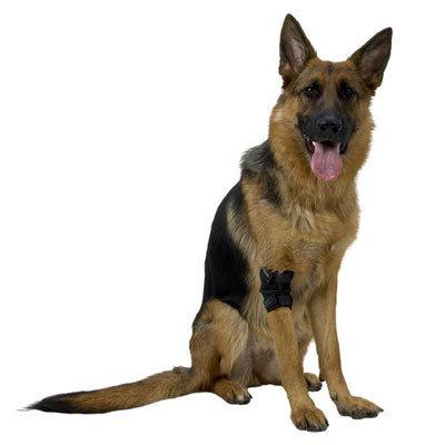 Kruuse Rehab Elbow Protector-ochraniacz stawu łokciowego dla psów