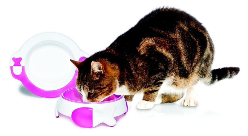 do you need to potty train a cat