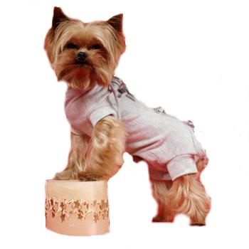 Grande Finale - koszulka pooperacyjna dla psa , kolor szary Ze specjalnym wycięciem dla samca