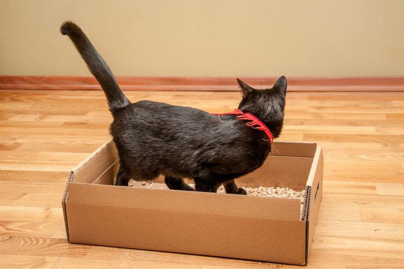 CATBOX ekologiczna, tekturowa kuweta dla kota