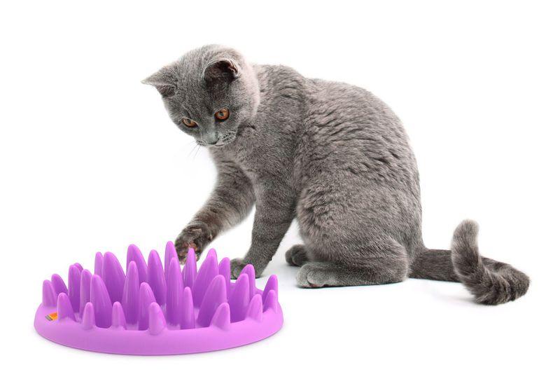 CATCH Interactive Feeder interaktywna miska spowalniająca jedzenie dla kota