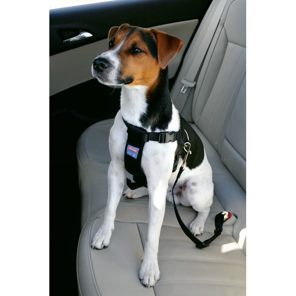 ZOLUX Szelki bezpieczeństwa do samochodu