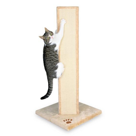 cat potty dance