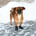 TRIXIE buty ochronne, trekkingowe dla psa Walker Active 2szt