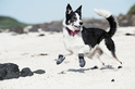 Hurtta Outback Boots - Wodoodporne buty dla psa, kolor grafitowy