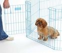 MIDWEST Life Stages Kojec- Zagroda dla psa, kolor niebieski 61x61cm