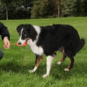 TRIXIE Zabawka Mot Fun - zabawka dla psa