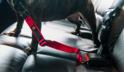 JOQU Click Car Safe - Pas do przypięcia psa w samochodzie, kolor czerwony