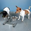 TRIXIE - dwie miski na regulowanym stojaku