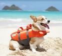 OUTWARD HOUND Kamizelka ratunkowa, kapok dla psa rozmiary XS,S,M i XL