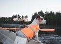 HURTTA Life Savior Kapok pomarańczowy dla psa, 5 rozmiarów