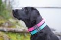 RUKKA SOLID SOFT obroża dla psa, różowa, 5 rozmiarów