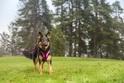 RUKKA SOLID szelki dla psa, różowe, 5 rozmiarów