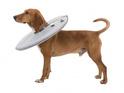 TRIXIE Kołnierz ochronny dla psa