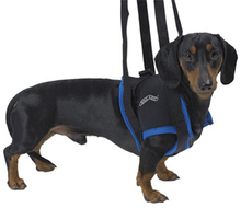 Walkabout Harness - nosidło dla psów lub kotów z urazami przednich kończyn
