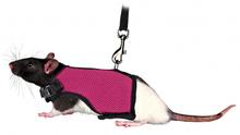Trixie Szelki ze smyczą dla szczura