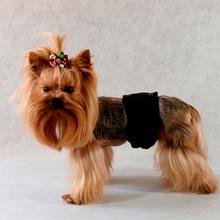 """Grande Finale - majtki """"Pampas"""" dla samców psów ras średnich i dużych NOWE DUŻE ROZMIARY!"""