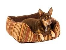 Petmate Pet Bed Plush- legowisko dla psa lub kota z miękkiego pluszu
