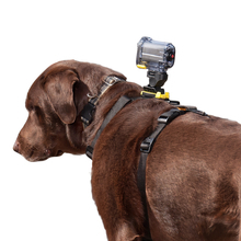 KURGO Camera Mount Harness - szelki do mocowania kamery na psie