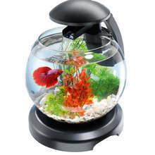 TETRA Cascade Globe - szklana kula z filtrem