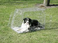 KENNEL KLATKA TRAPEZ VIII- klatka dla psów ze ściętym bokiem