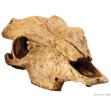 EXO TERRA - czaszka bawoła do terrarium