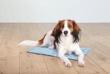 TRIXIE Mata chłodząca dla psa, jasnoniebieska