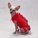 Grande Finale - koszulka pooperacyjna dla psa i kota, kolor czerwony, OSTATNIE SZTUKI!