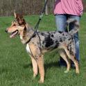 Trixie Easy Walker - szelki dla psa