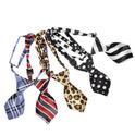CAMON krawat dla małego psa 15 x 5cm