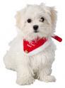 TRIXIE Obroża z chustą dla kota i psa
