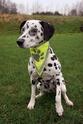 Trixie odblaskowa apaszka dla psa, Zwiększa widoczność i bezpieczeństwo!