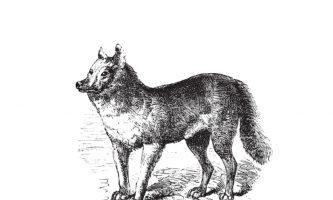 zachowania nieelastyczne u psa
