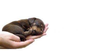 delikatny dotyk jest bardzo ważny dla szczeniaków