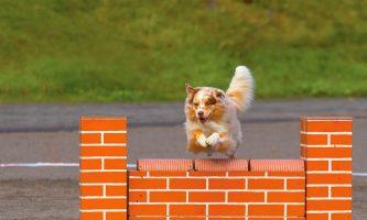 sporty sprawnościowe i szybkościowe dla psów