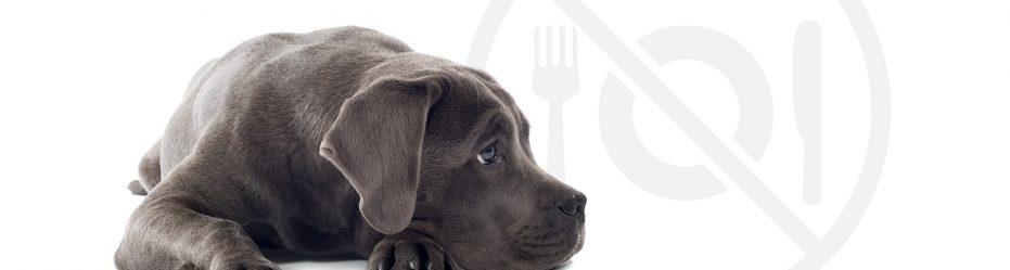 czego nie dawać psu do jedzenia