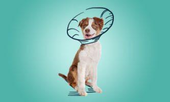 kastracja i sterylizacja psów