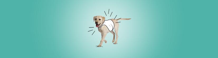 kamilzelka odblaskowa dla psa