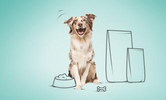 ranking karm dla psa