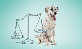 dbanie o odpowiednią wagę psa