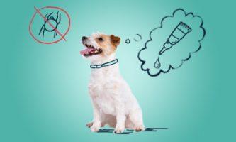 ochrona psa przed kleszczami