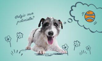 zabawki dla psa piłki szarpaki frisbee