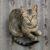 kot nierasowy dachowiec kot sfinks sphynx choroby u kotów
