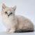 munchikin kot choroby kotów