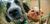 adopcja psa wybór psa ze schroniska