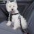 szelki i pasy bezpieczeństwa dla psów trixie