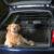 trixie krata do samochodu