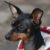 pies rasy pinczer miniaturowy